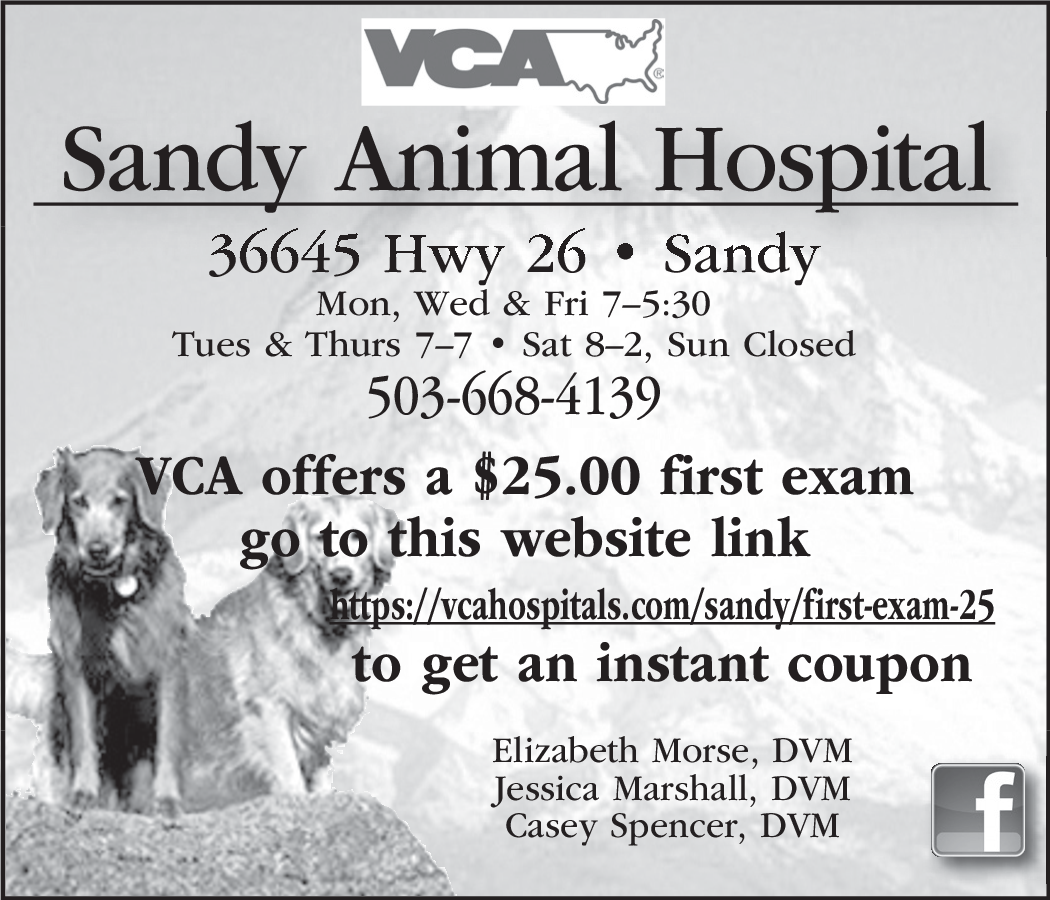Image of: Parker Co Great Animal Hospital In Sandy Or Veterinary Services Sandy Animal Clinic Shutterstock Great Animal Hospital In Sandy Or Veterinary Services Sandy